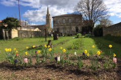 19-mars-2019-Reveil-en-couleur...massif-de-bulbes-en-fleurs-plantes-par-les-CP