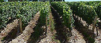 Découvrir les châteaux viticoles